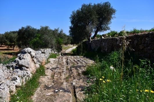 DSC_5648 Masserie di Fasano