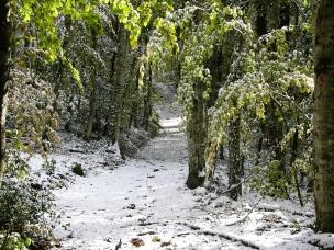 DSCN0947 Foresta Umbra